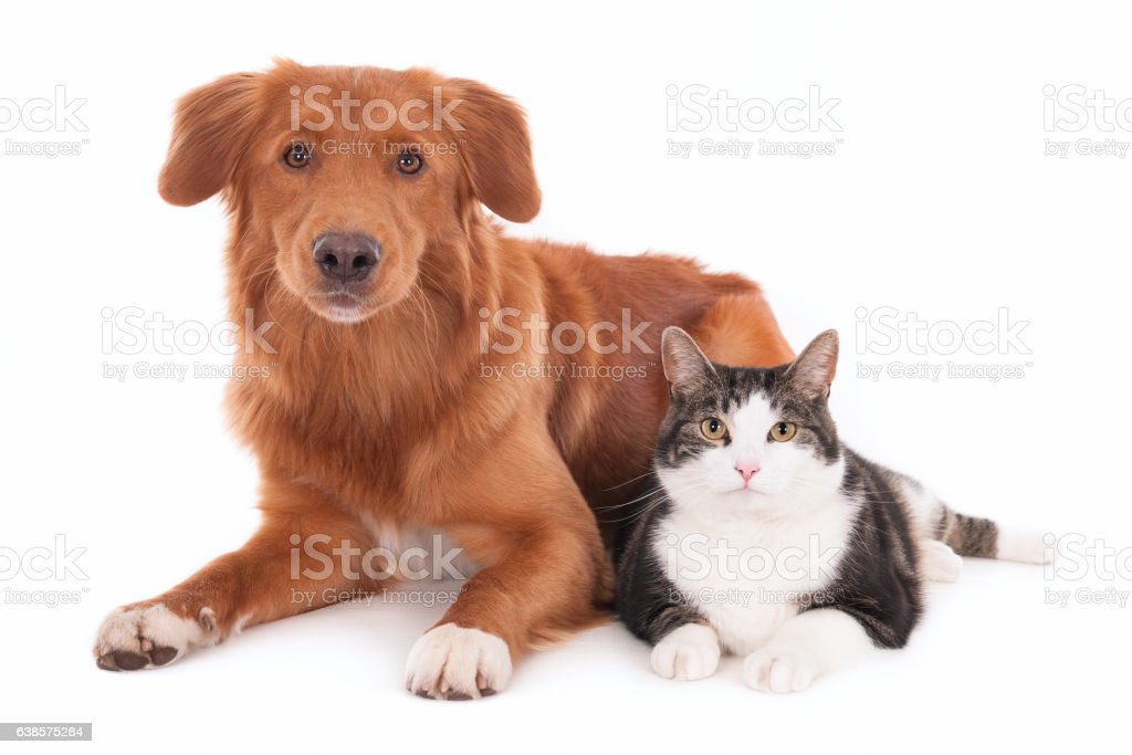 Cat and dog, side by side stock photo