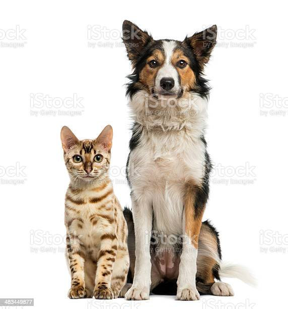 Cat and dog sitting together facing at the camera picture id483449877?b=1&k=6&m=483449877&s=612x612&h=s0sy nkjj2lmq 86kxawzwe9ksmqbut0ejshzdbz6mc=