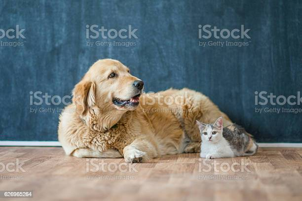 Cat and dog sitting together picture id626965264?b=1&k=6&m=626965264&s=612x612&h=2u1mdbi9li3ffckwylkg3fmpyjlvxhsdwgv40yahpic=