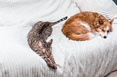 istock Cat and dog sleep together on the bed at home. friendship concept 1254191992
