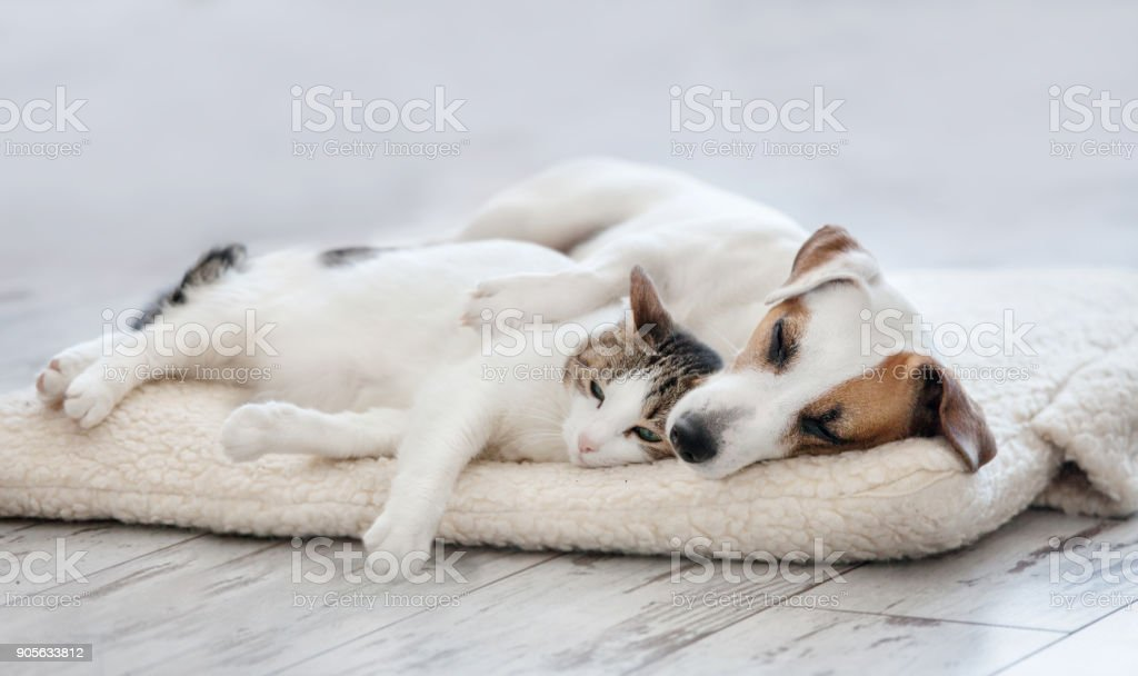 Cat and dog sleeping stock photo