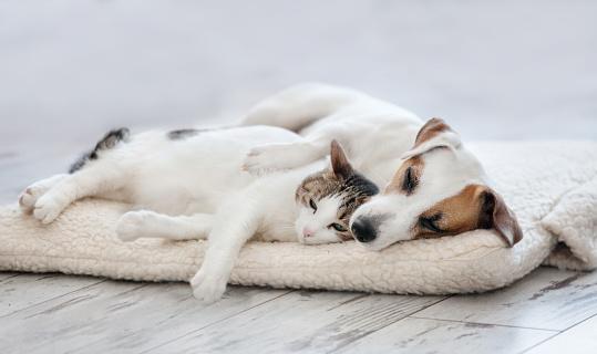 Kedi Ve Köpek Uyku Stok Fotoğraflar & Arkadaşlık'nin Daha Fazla Resimleri