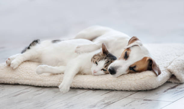 cat and dog sleeping - dog stock pictures, royalty-free photos & images
