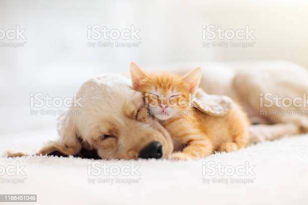 Photo of Cat and dog sleeping. Puppy and kitten sleep.