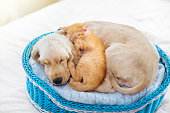 istock Cat and dog sleeping. Puppy and kitten sleep. 1171731668