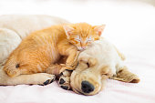 istock Cat and dog sleeping. Puppy and kitten sleep. 1171731803