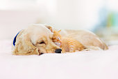 istock Cat and dog sleeping. Puppy and kitten sleep. 1171736063