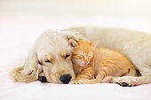 istock Cat and dog sleeping. Puppy and kitten sleep. 1171736919