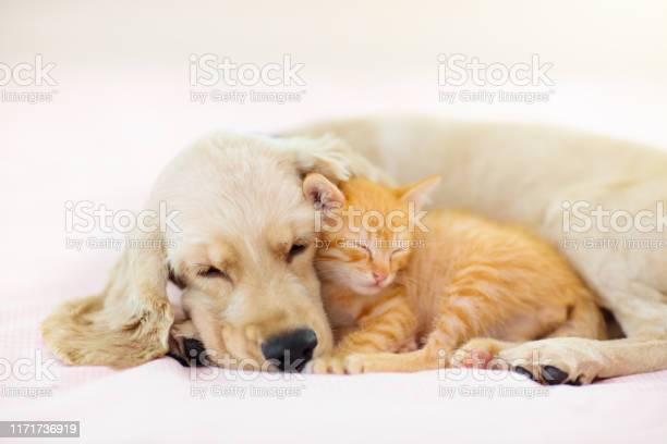 Cat and dog sleeping puppy and kitten sleep picture id1171736919?b=1&k=6&m=1171736919&s=612x612&h=gd2osznnmwv5vh3zibkivtsh4jzaetdpzjmsz2f3hnw=