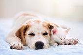 istock Cat and dog sleeping. Puppy and kitten sleep. 1223452697