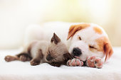 istock Cat and dog sleeping. Puppy and kitten sleep. 1270971690