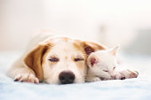 istock Cat and dog sleeping. Puppy and kitten sleep. 1279962039