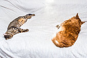 istock Cat and dog sleeping together on a bed in an apartment. 1254003348