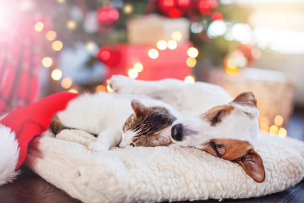 Katze und Hund schlafen unter Weihnachtsbaum – Foto