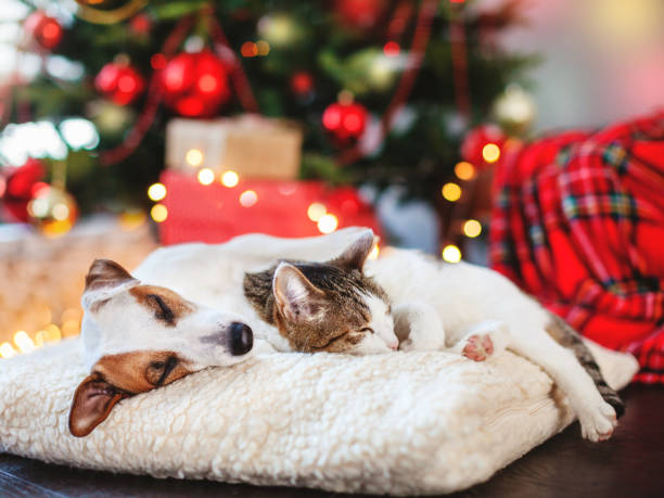 cat and dog sleeping under christmas tree - pets imagens e fotografias de stock