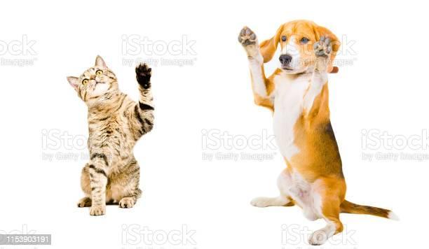 Cat and dog standing together picture id1153903191?b=1&k=6&m=1153903191&s=612x612&h=k o0ekipwwmwlayf 1iarf5uvkneugziqeyuxwu ctc=