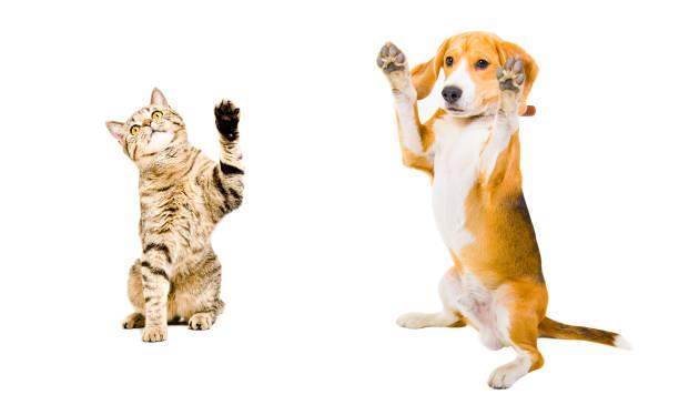 Cat and dog standing together picture id1153903191?b=1&k=6&m=1153903191&s=612x612&w=0&h=wk49qnr7tbfcgchgbliidnfjdofqdgqhekli2p6 lr0=