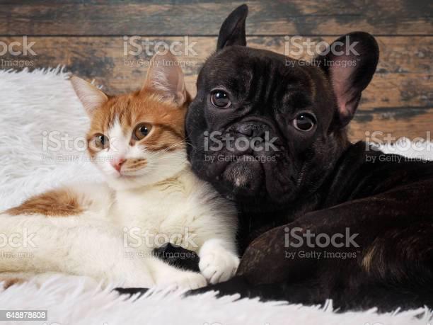 Cat and dog together cute pets portrait picture id648878608?b=1&k=6&m=648878608&s=612x612&h=x4wqngthfchco9ciwsb2scpnro3z2x h3cxozewvk9s=