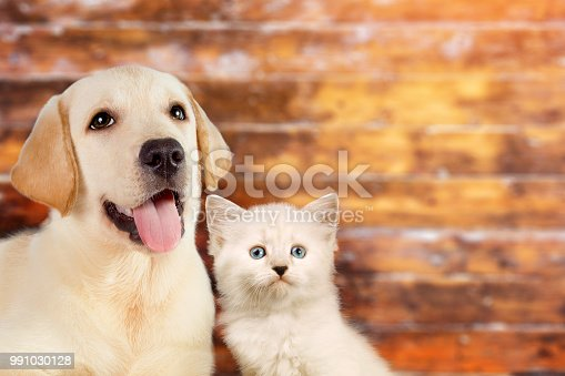 istock Cat and dog together, neva masquerade kitten, golden retriever looks at right on wooden blurry background with copy space 991030128