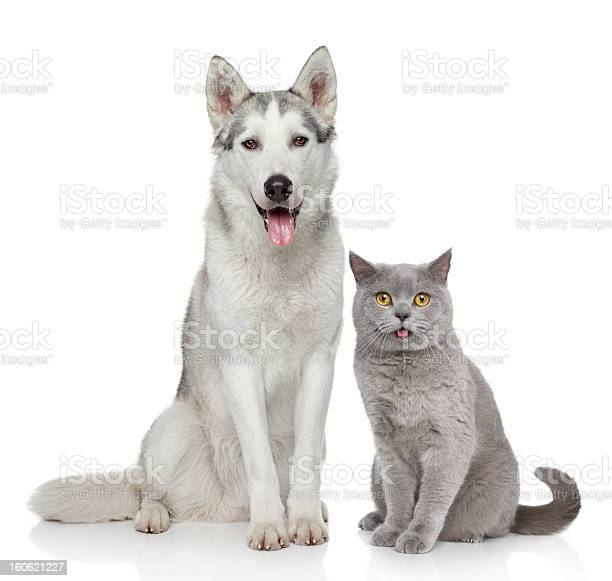 Cat and dog together on a white background picture id160621227?b=1&k=6&m=160621227&s=612x612&h=7ocihdjlvicweaewydqqioiws846jg02fuifmw9l0gk=
