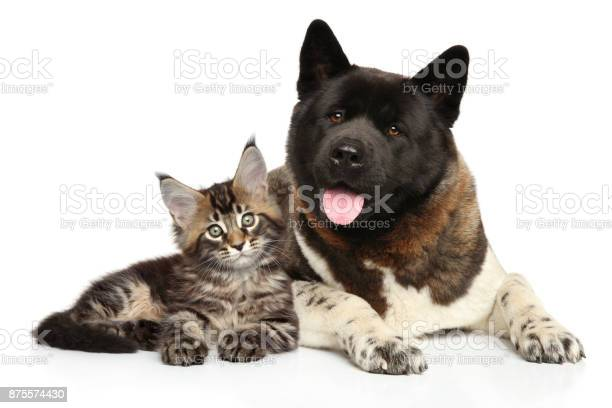 Cat and dog together on white background picture id875574430?b=1&k=6&m=875574430&s=612x612&h=dphyp6nmum41k2 3ryc2ujlbsxafi0scvbguk6cbd64=