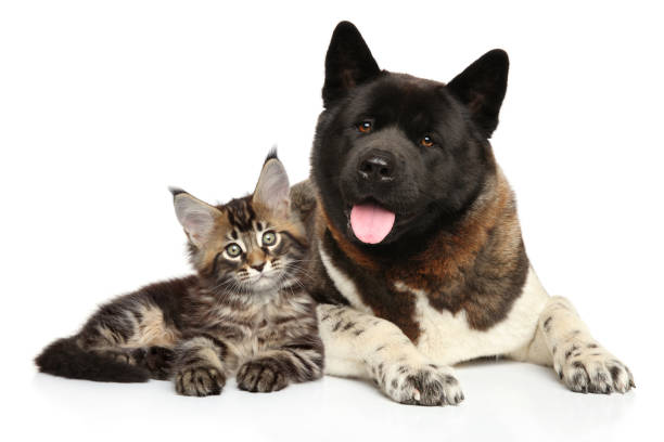 Cat and dog together on white background picture id875574430?b=1&k=6&m=875574430&s=612x612&w=0&h=nekt2i8ujr3gkrghd6e06q zpjmmlgvejo4kja3fqh4=