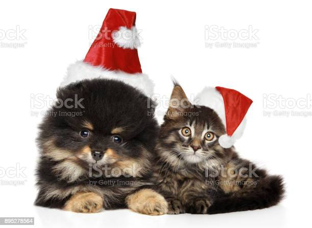 Cat and dog together on white in christmas hats picture id895278564?b=1&k=6&m=895278564&s=612x612&h=c  qgdigk0canfrx o9vryqlft54c6oj6llxrkyyli0=