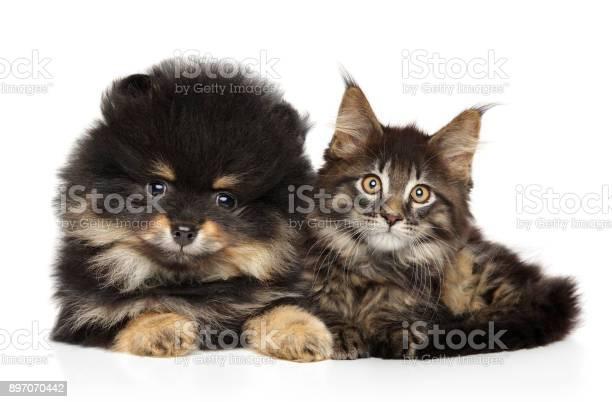 Cat and dog together on white picture id897070442?b=1&k=6&m=897070442&s=612x612&h=obje3bmotw yv8xx m puzrysfvxtln9 rjhghe twy=