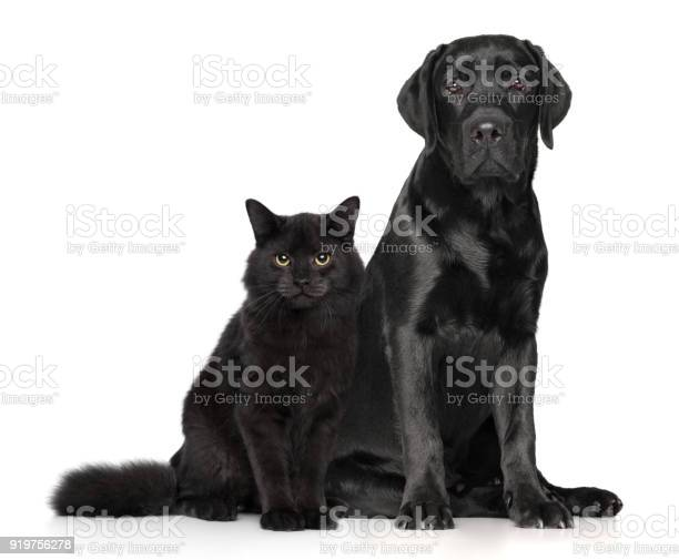 Cat and dog together on white picture id919756278?b=1&k=6&m=919756278&s=612x612&h=hrwnukjifarutmi6ijh9svyned8ondchvm6yjaeeb38=