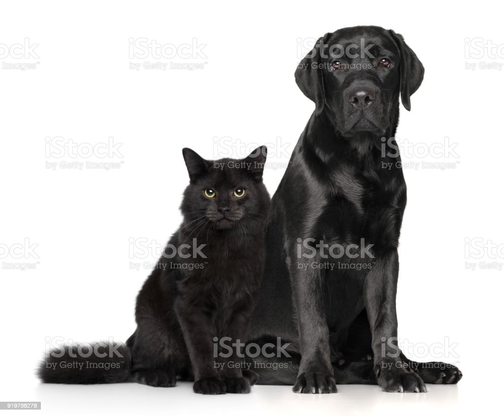 Cat and dog together on white stock photo