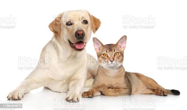 Cat and dog together picture id1158494670?b=1&k=6&m=1158494670&s=612x612&h=thpypp7ozg34krvj9kjkusduxch7nra7xkhmkvtsn4y=