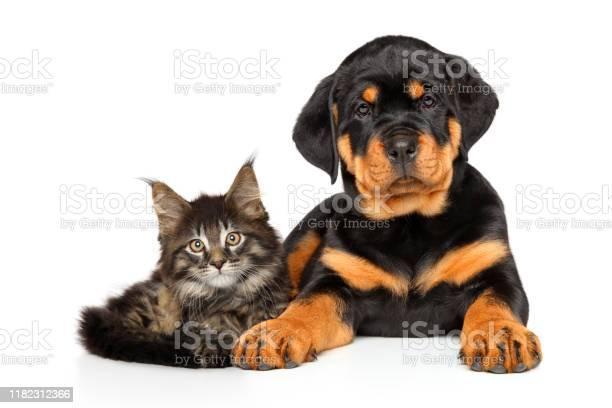 Cat and dog together picture id1182312366?b=1&k=6&m=1182312366&s=612x612&h=1hw4axayttkrmtgzcpvcnciadkug p19oq3cwswbl 0=