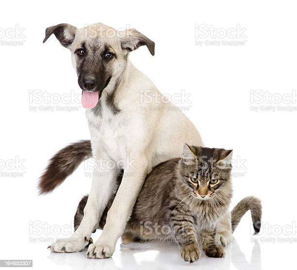 Cat and dog together picture id164653307?b=1&k=6&m=164653307&s=612x612&h=iumkcck 1pqlzdozi53ho8qv4mg6ez3cqcfyek7ubrg=