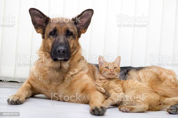 Cat and dog together picture id450373737?b=1&k=6&m=450373737&s=612x612&h=6cfe htxivd4ktiu0qpty2cbbprftetdqar dlajrwg=