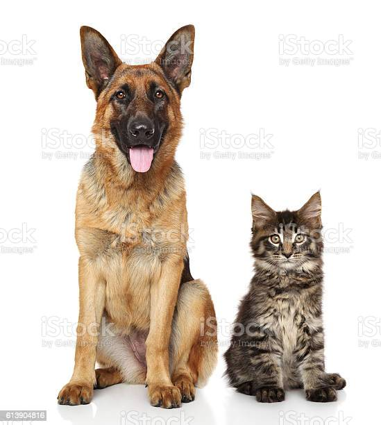 Cat and dog together picture id613904816?b=1&k=6&m=613904816&s=612x612&h=6ftixewmo16tn4mse2i0neolineeuggt41hfz4qn6q8=