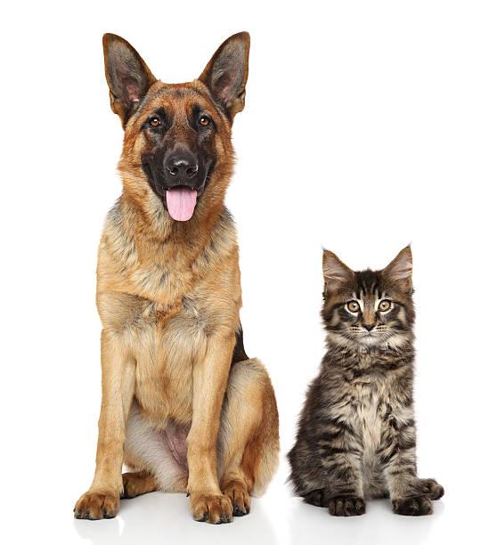 Chat et chien ensemble - Photo