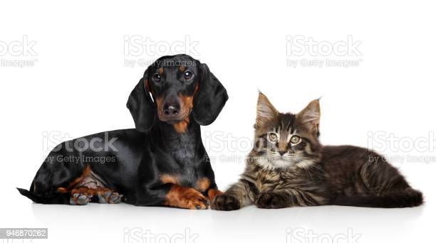 Cat and dog together picture id946870262?b=1&k=6&m=946870262&s=612x612&h=cdvoizo5a9hu43bah16 dmasu2 vwfsanbzwzueaqy8=