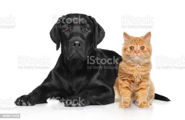 Cat and dog together picture id946870408?b=1&k=6&m=946870408&s=612x612&h=l0xz fgaihw9jiw7caywvkiwldwpcqqwj hflqu3sjy=