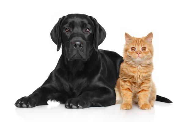 Cat and dog together picture id946870408?b=1&k=6&m=946870408&s=612x612&w=0&h=fuybhxhw2mefzvv7s2rbj21kcc1qjmypmzr7bjmwxra=