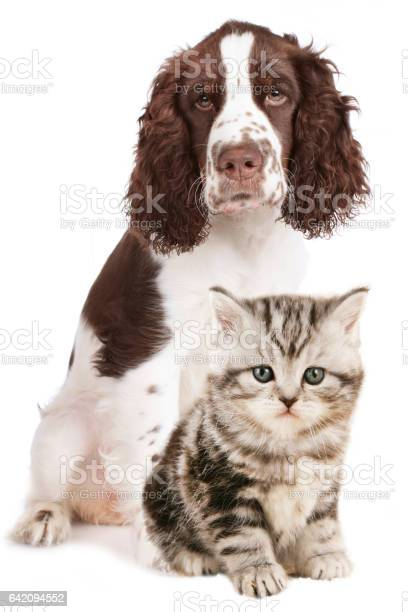 Cat and dog together sitting isolated picture id642094552?b=1&k=6&m=642094552&s=612x612&h=jj8fe2iifq5zuzgqs4gh yvwj13h9i16rmcrfzzggbg=
