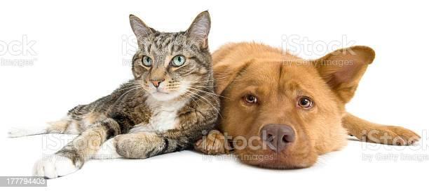 Cat and dog together wide angle picture id177794403?b=1&k=6&m=177794403&s=612x612&h=gwaegdf7mwv9clkwtk yiofi2egkeo1owedefft9h0i=