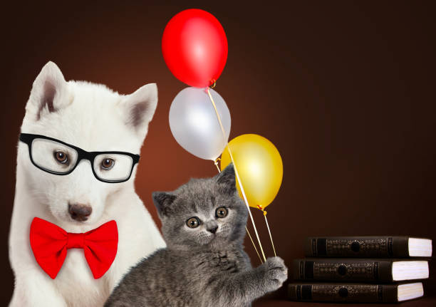 Cat and dog together with books and balloons scottish kitten husky picture id833728504?b=1&k=6&m=833728504&s=612x612&w=0&h=crcmhciilpx1eivmti03hfr4vvv kr8lacykp xbc u=