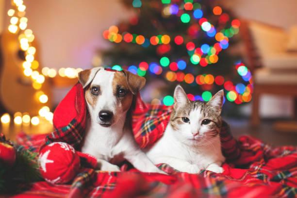 gato y perro debajo de un árbol de navidad - mascota fotografías e imágenes de stock