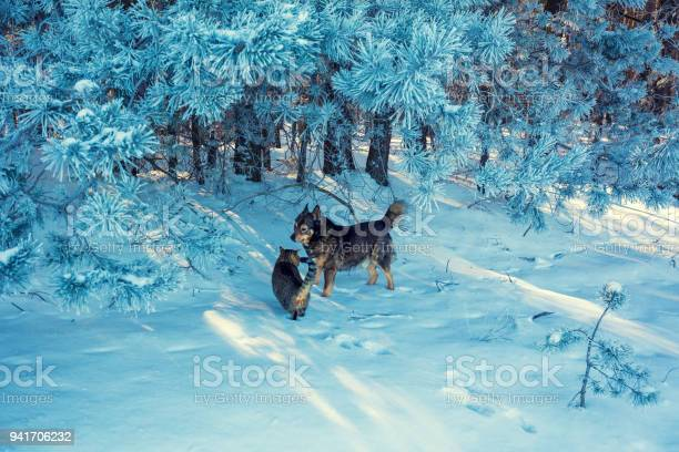 Cat and dog walking in snowy pine forest winter nature picture id941706232?b=1&k=6&m=941706232&s=612x612&h=g0vetrx0yridgto3yuefi5mtlibqyfsfki s20z4icm=