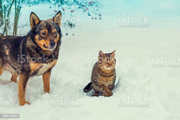 Cat and dog walking together in snowy winter picture id503104374?b=1&k=6&m=503104374&s=612x612&h=snzuvdkpldehtoevmz9gfcgiwig6plg8kjoziww40ik=