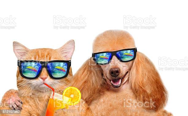 Cat and dog wearing sunglasses relaxing in the sea background picture id512107982?b=1&k=6&m=512107982&s=612x612&h=x6gl93hpz9r6jvy9wlndei boakdfxu60ywe9txp65u=