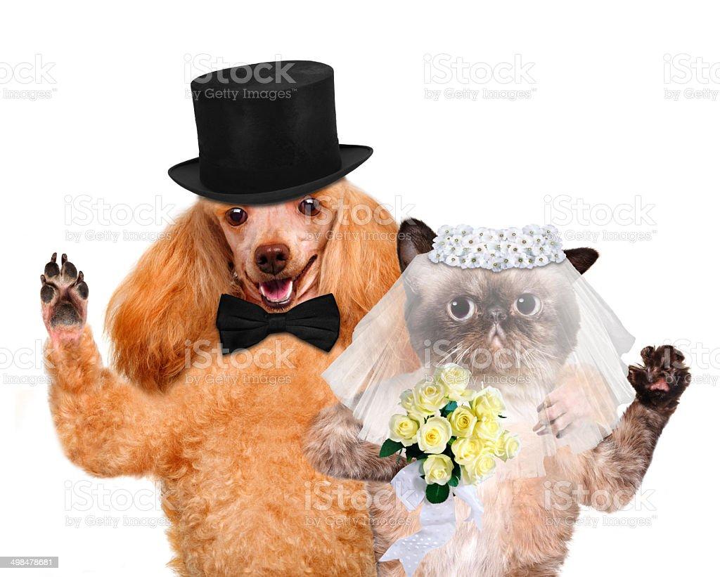 Cat and Dog. Wedding royalty-free stock photo