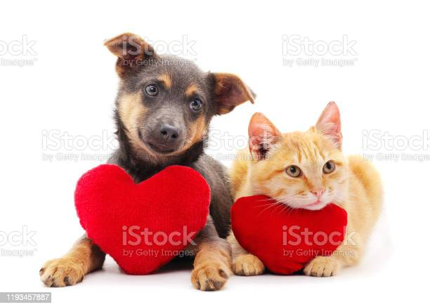 Cat and dog with a toy heart picture id1193457887?b=1&k=6&m=1193457887&s=612x612&h=ylb70oj7zxfp0hhaiqbnbnji8op wtxpp3bc4wekces=