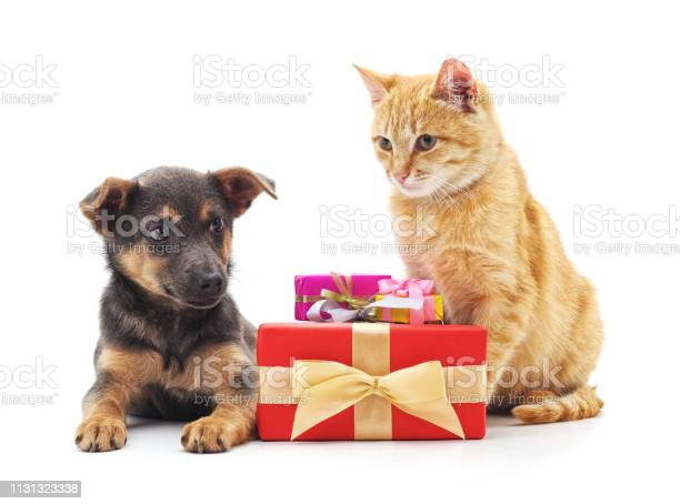 Cat and dog with gifts picture id1131323338?b=1&k=6&m=1131323338&s=612x612&h= mwe15piv2khle8ckuy wofxps4hcbbu3zxbu1md8ms=