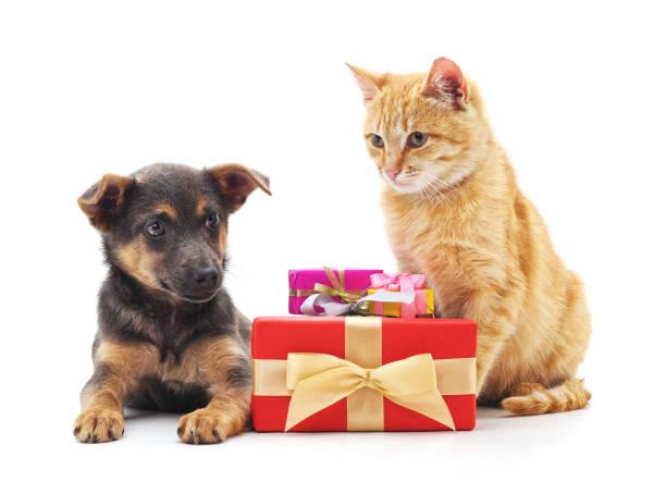 Cat and dog with gifts picture id1131323338?b=1&k=6&m=1131323338&s=612x612&w=0&h=dh9gbfxowvx0dksyeamcodipkf5qgehapmobnloh7qq=